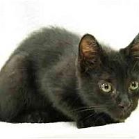 Adopt A Pet :: Pyewacket - Modesto, CA