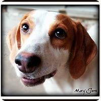 Adopt A Pet :: Mary Jane - Pascagoula, MS