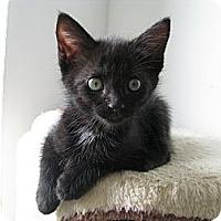 Adopt A Pet :: Quincy - Vero Beach, FL