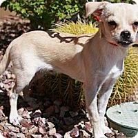 Adopt A Pet :: Derrek - Gilbert, AZ