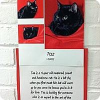 Adopt A Pet :: Taz - Whitestone, NY