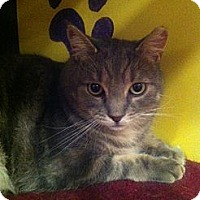 Adopt A Pet :: Campbell (LE) - Little Falls, NJ