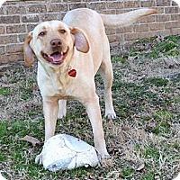 Adopt A Pet :: *Dallas - PENDING - Westport, CT