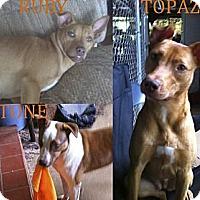 Adopt A Pet :: Topaz - Killen, AL