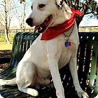 Adopt A Pet :: Cane - Tampa, FL