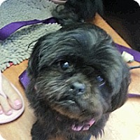 Adopt A Pet :: Ebony - Northumberland, ON