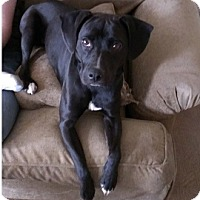 Adopt A Pet :: Miley - Hamilton, ON
