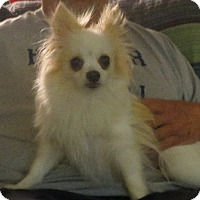 Adopt A Pet :: Mia - Westport, CT