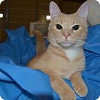 Adopt A Pet :: Moby - Springdale, AR