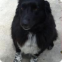 Adopt A Pet :: Pepper - Lebanon, CT
