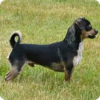 Adopt A Pet :: STABLER - Portland, OR