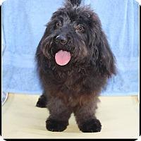 Adopt A Pet :: Bordentown NJ - Cuba - New Jersey, NJ