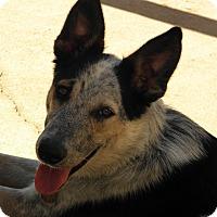 Adopt A Pet :: Rascal - York, SC