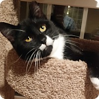 Adopt A Pet :: Cho - Lenhartsville, PA