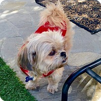 Adopt A Pet :: Ginger is very sweet! - Redondo Beach, CA