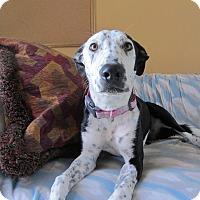Adopt A Pet :: Pepper - Ridgway, CO