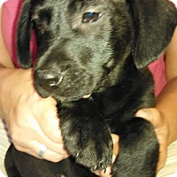 Adopt A Pet :: Baxter - Charlestown, RI