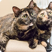 Adopt A Pet :: Cashew and Macadamia - Chicago, IL