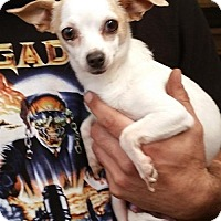 Adopt A Pet :: Felicity - Stockton, CA