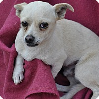 Adopt A Pet :: Billy - Palmdale, CA