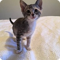 Adopt A Pet :: Ruth - Chicago, IL