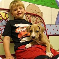 Adopt A Pet :: Star - Elyria, OH
