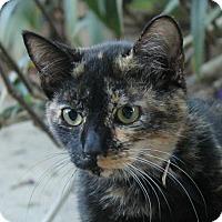Adopt A Pet :: Veruca - Ocean Springs, MS