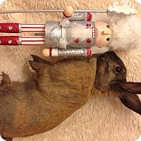 Adopt A Pet :: Moana - Paramount, CA