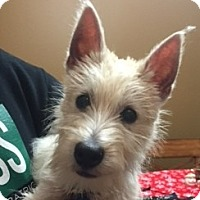 Adopt A Pet :: Comet-Pending Adoption - Omaha, NE