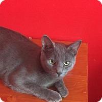 Adopt A Pet :: Earl - Philadelphia, PA