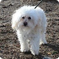 Adopt A Pet :: Lamont - Gardnerville, NV