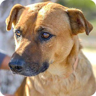 BRUCE | Adopted Dog | ...