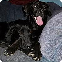 Adopt A Pet :: Pocahontas - Rome, NY