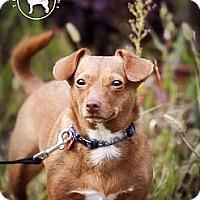 Adopt A Pet :: Mollie  Adopted - Nine Mile Falls, WA