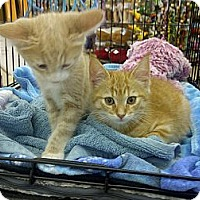 Adopt A Pet :: Harrison and Cash - Vero Beach, FL