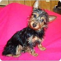 Adopt A Pet :: Bella - Staunton, VA