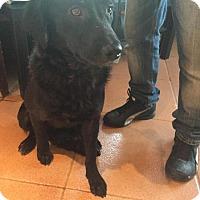 Adopt A Pet :: Margo - Houston, TX