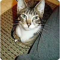 Adopt A Pet :: Candi - Cleveland, OH