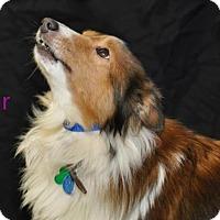 Adopt A Pet :: Stars - COLUMBUS, OH