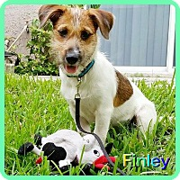 Adopt A Pet :: Finley - Hollywood, FL