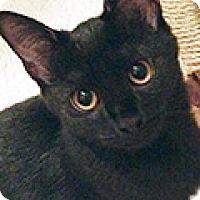 Adopt A Pet :: Chino - Durham, NC