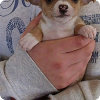 Adopt A Pet :: MOUSE PUPS B - Corona, CA