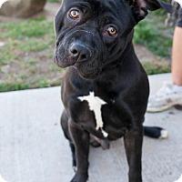 Adopt A Pet :: Smithers - San Diego, CA