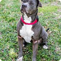 Adopt A Pet :: Kismet - Miami, FL