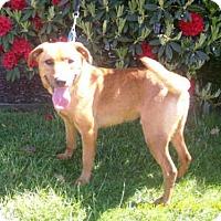 Adopt A Pet :: HAPPY - McKinleyville, CA