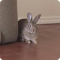 Adopt A Pet :: Titania - Albuquerque, NM