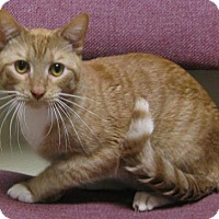 Adopt A Pet :: Sherbert - Gary, IN