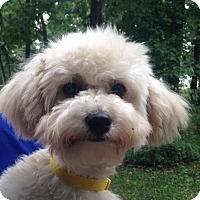 Adopt A Pet :: Luna - Allentown, PA