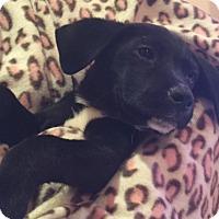 Adopt A Pet :: Jessie - Tampa, FL