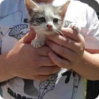 Adopt A Pet :: A591119 - Louisville, KY